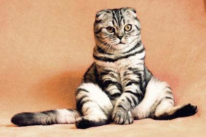 cat-2934720_960_720
