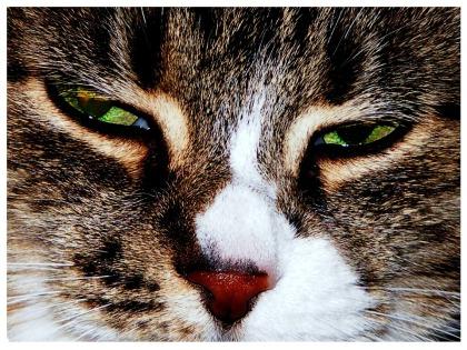 cat-199577_960_720.jpg