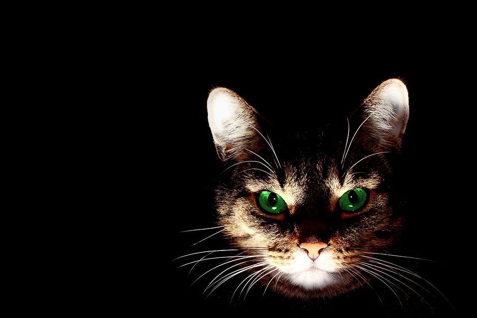 cat-606532_960_720.jpg