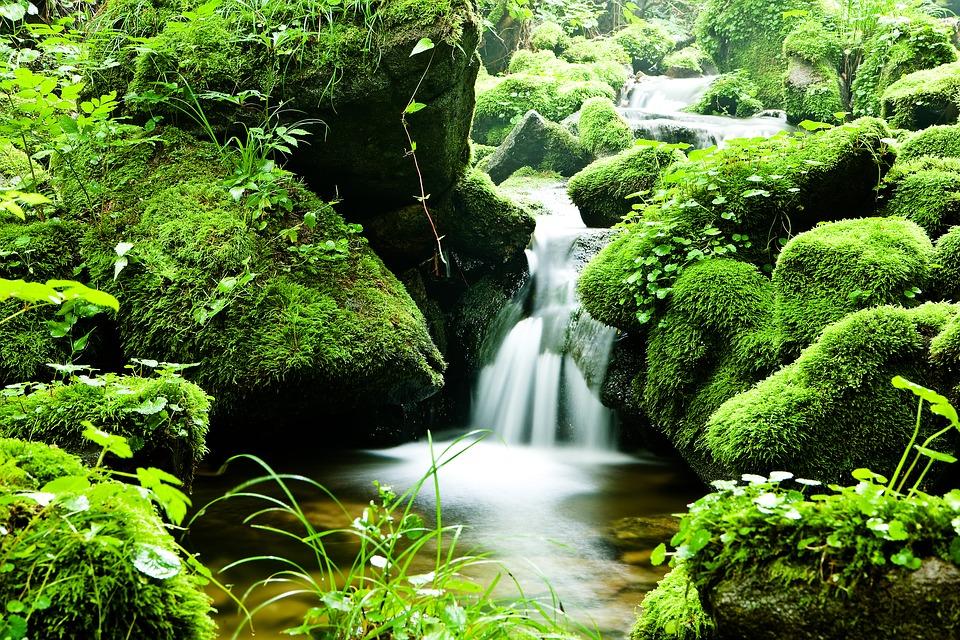 forest-1256839_960_720.jpg