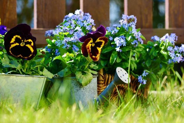 garden-2179571_960_720