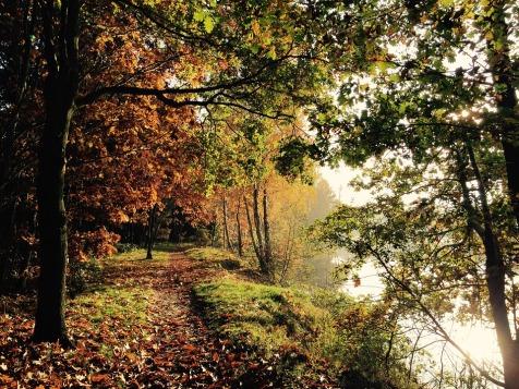 nature-1054544_960_720.jpg