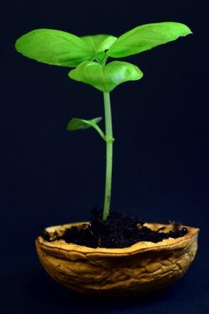 plant-3117533_960_720