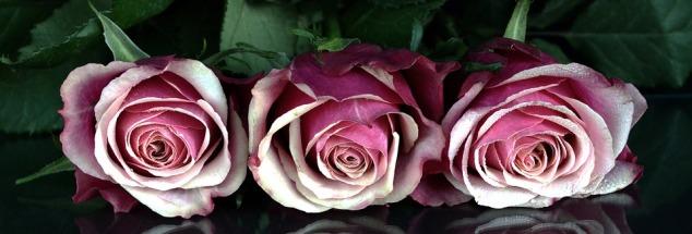 roses-1706448_960_720.jpg