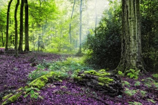 forest-4569849_960_720.jpg