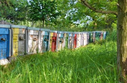 beekeeping-4232534_960_720.jpg