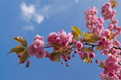 flower-3217825_1280