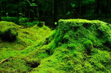 forest-483206_1280